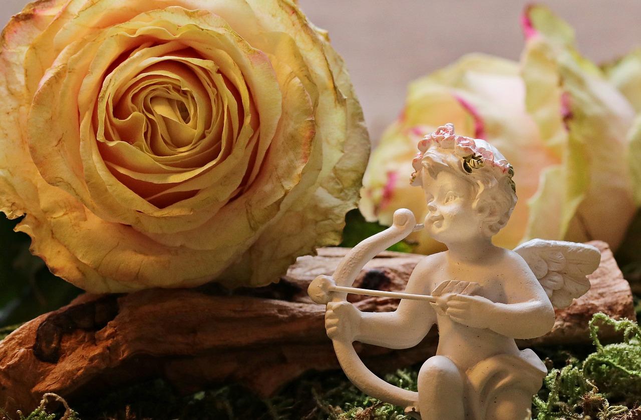 rose-2042270_1280