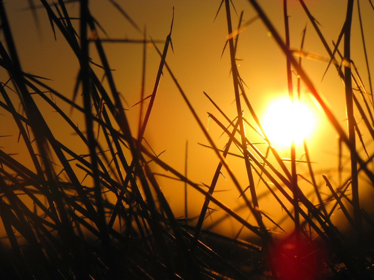sunset-142186_1280